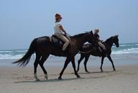 OBX Horseback Riding